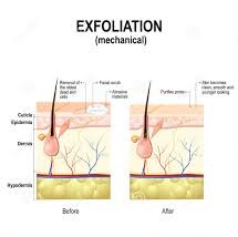 study skin layers before exfoliation